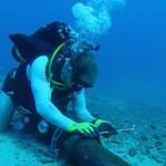 [Tin vui] Cáp quang biển AAG dự kiến được hàn xong ngày 30 tháng 09