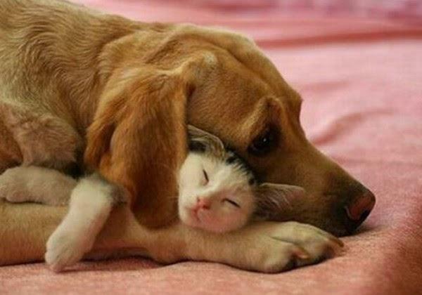 Ảnh đại diện Facebook hình ảnh chó mèo dễ thương, đáng yêu